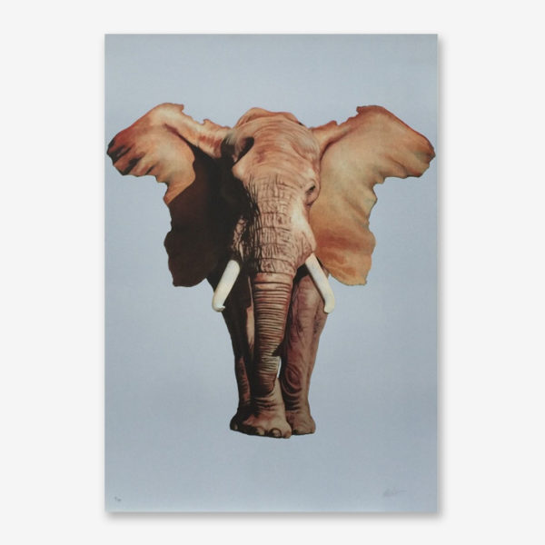 african-elephant-ron-english-print-them-all-lithograph